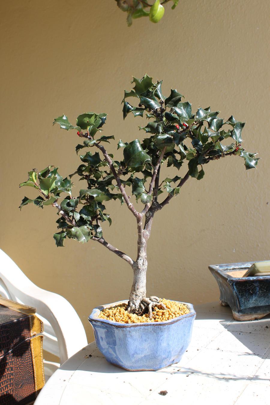 bonsai wallpaper 03 ndash - photo #39