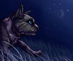 Crowfeather by xxSkyfrost