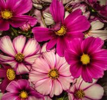 ... believe ... by FlowerOfTheForest
