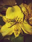 A soul by FlowerOfTheForest