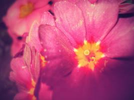 See the sun shine by FlowerOfTheForest