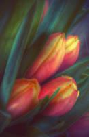... spring ... by FlowerOfTheForest