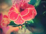 ... fall in love ...