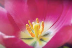 ... light ... by FlowerOfTheForest