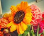 ... sun kissed ... by FlowerOfTheForest