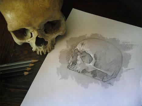 Skull Study Drawing | Practice