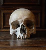 I. Skull Stock   Frontal View by NaamahVonhell