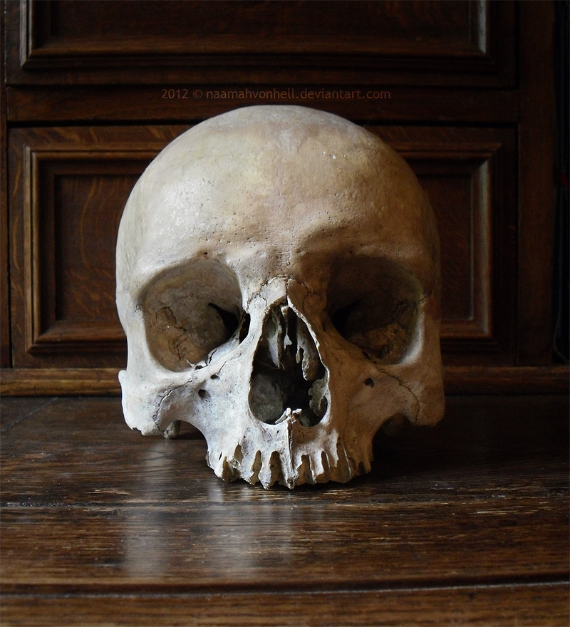 I. Skull Stock | Frontal View by NaamahVonhell