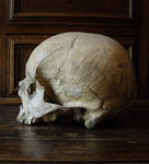 II. Skull Stock | Side View