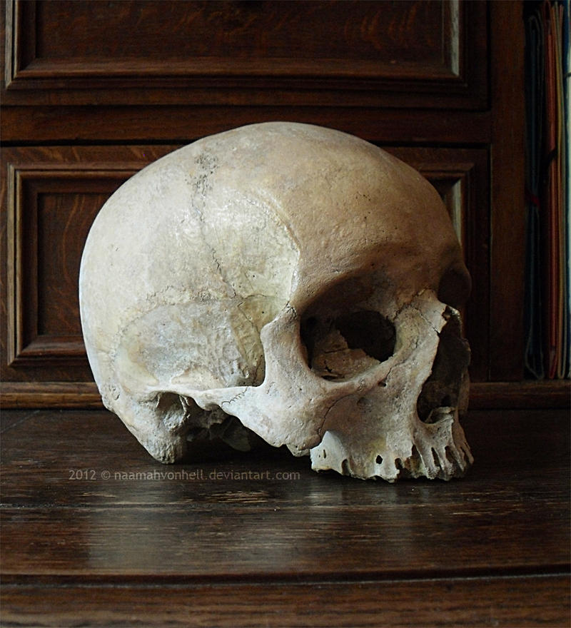 III. Skull Stock | 3/4 View by NaamahVonhell