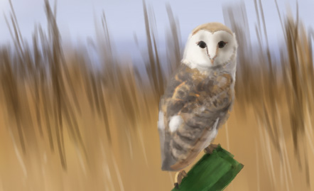 Quick owl sketch by didok80