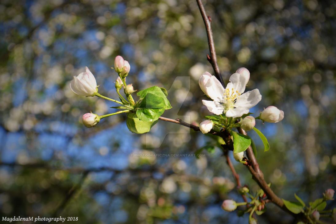 Hello Spring by Photograficzna