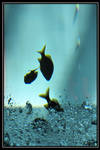 Diving fish? by eskimoblueboy