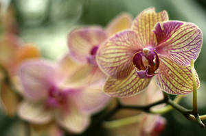 Just an orchid