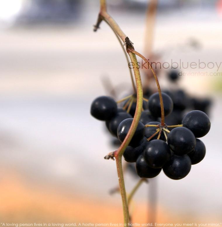 Berries II by eskimoblueboy