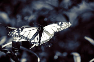 Death of a Butterfly by lateralus1939