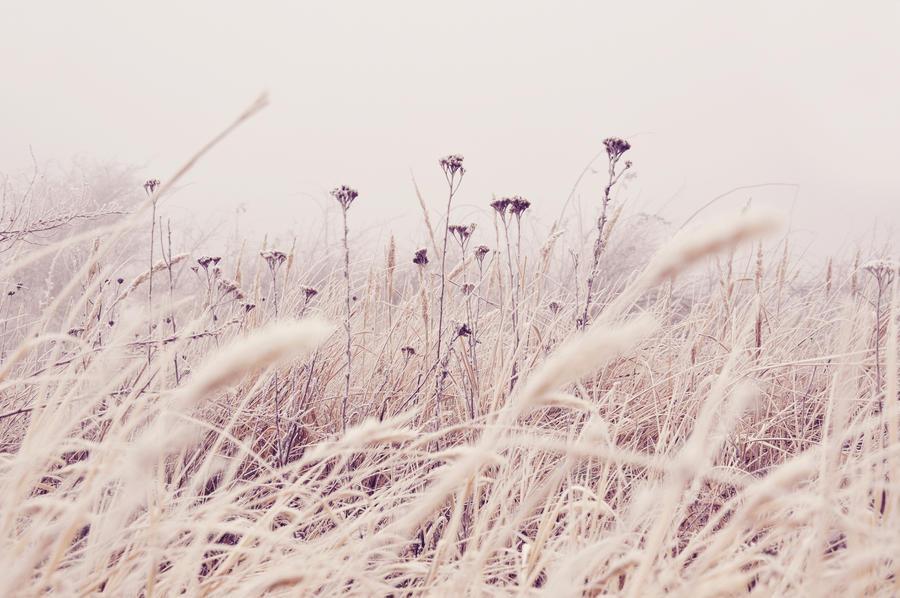 Morning Frost by DejanB