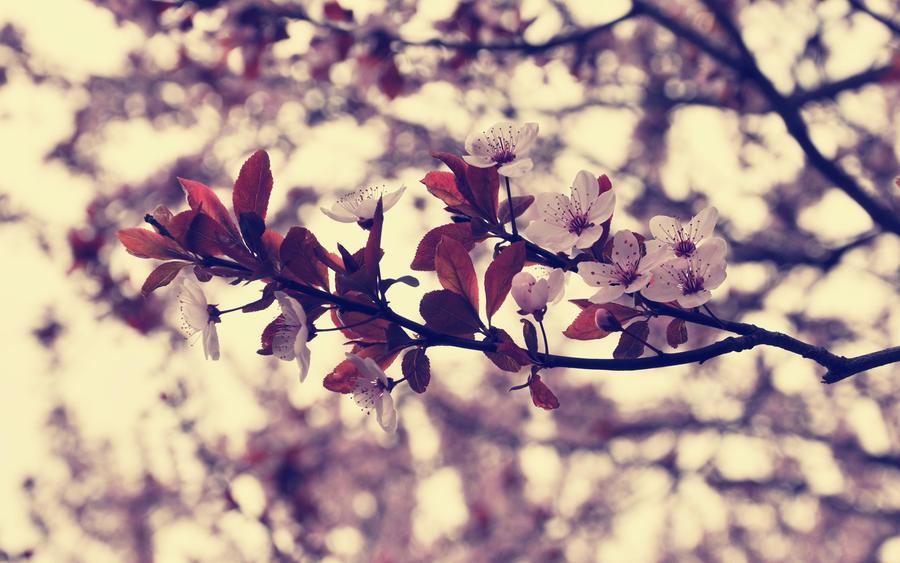 Vanilla Sky by DejanB