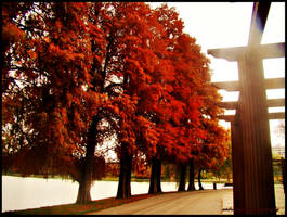 Fall in Bucharest