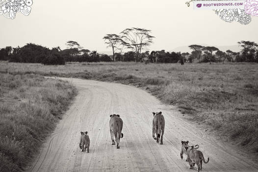 Africa : Family