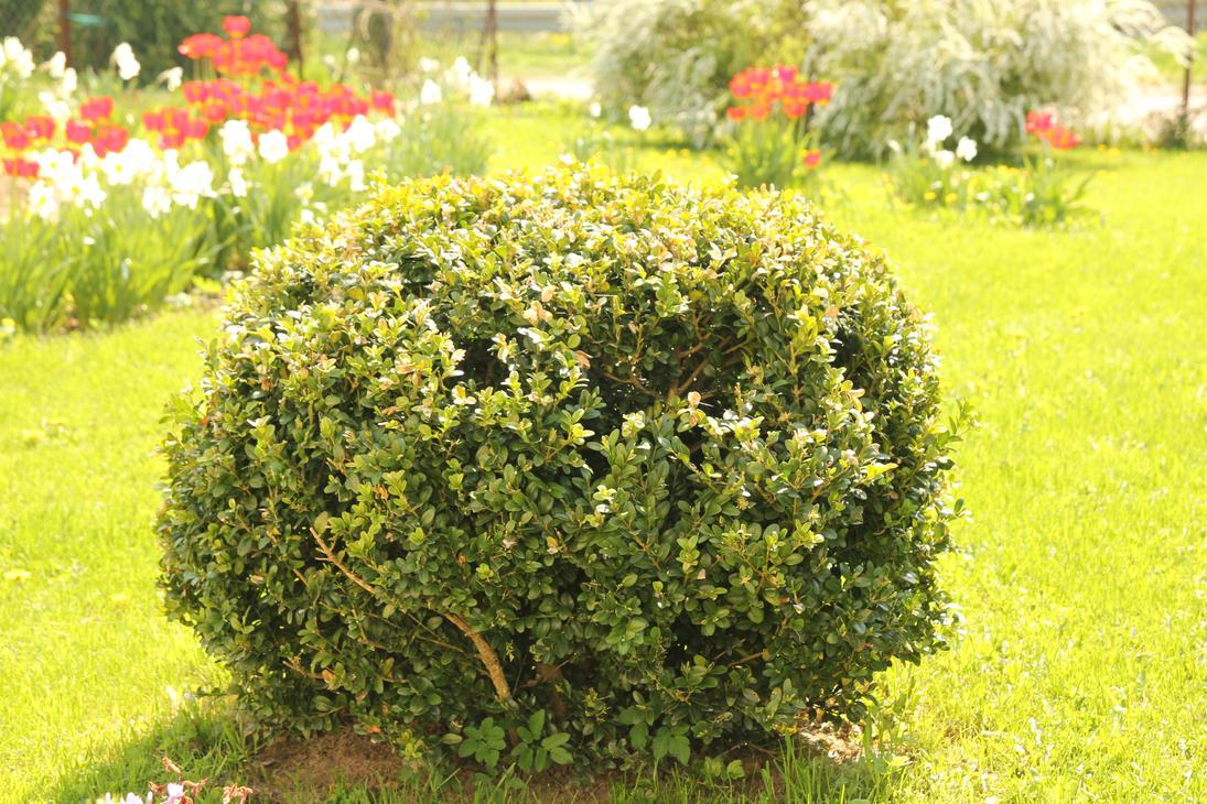 Bush In The Garden By Rax0n ...