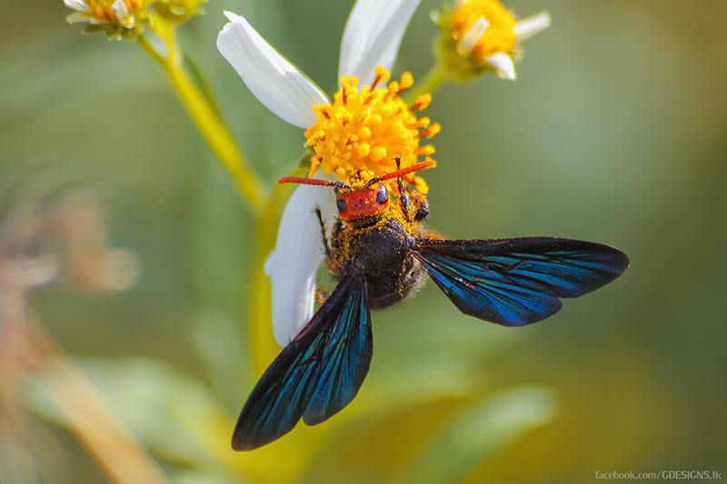 beesy me by lgregorio
