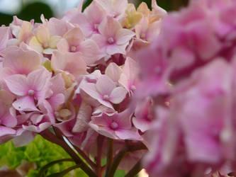 Pink flower bush II by ithilwenia