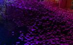pixel density