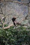 Monkey - 02