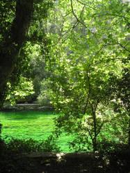 Pure Water - Foliage