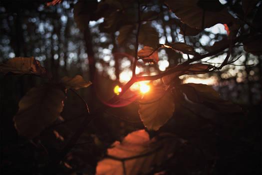 Autumn's last rays