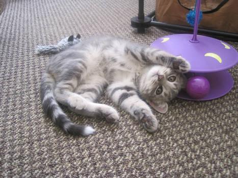 Tamarind Cat