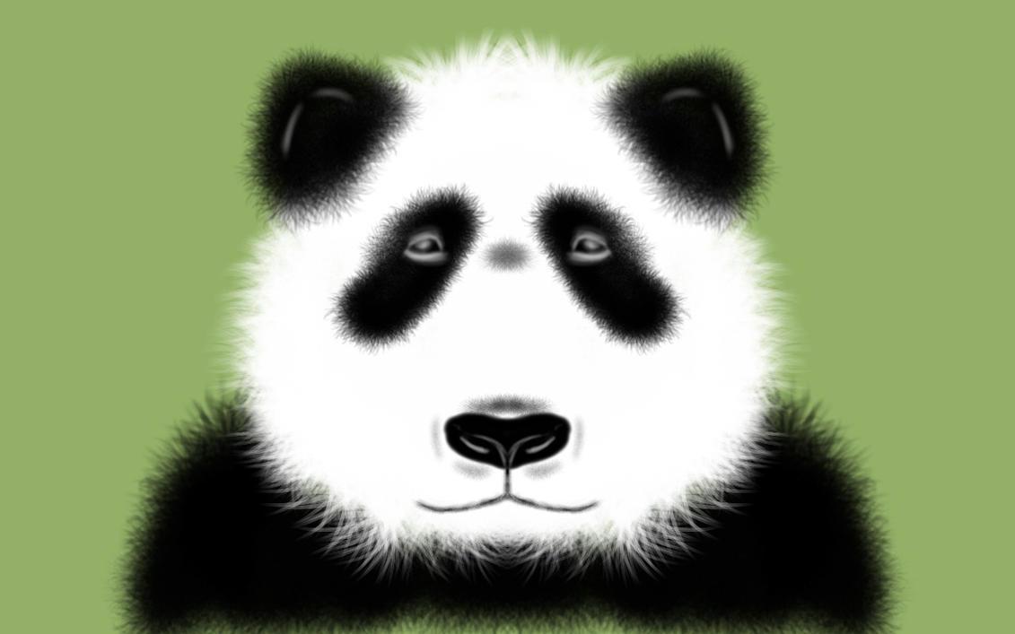 Panda by rioken974