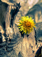 Yellow Flower by JanuaryLOVER