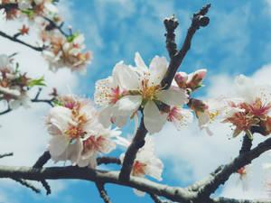 Blossom :)