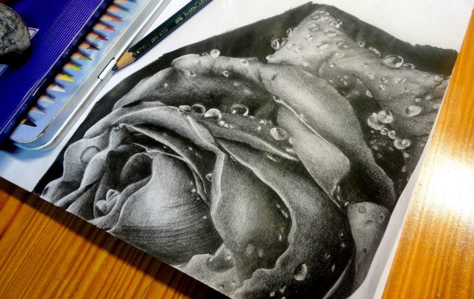 Rose by DanielaDBD