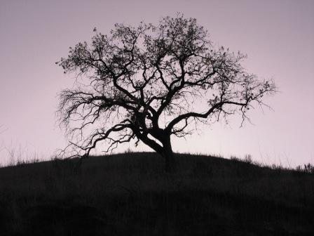 Lonesome Oak by katonk