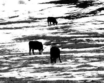 steaks on ice by katonk
