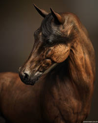 Portrait of a Horse by deathbycanon