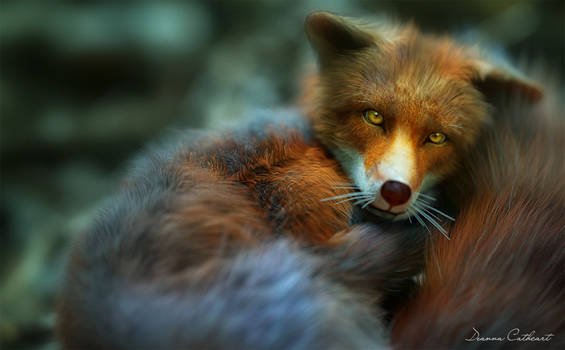 Sleepy Little Fox