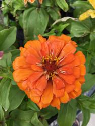 flower hhg by dublodz