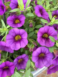 flower ytt by dublodz