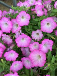 flower rte by dublodz