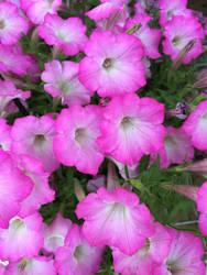 flower dre by dublodz