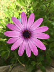 flower gft by dublodz