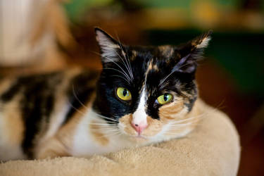 Meow - Mina I