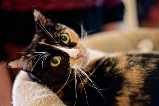 Meow - Mina II