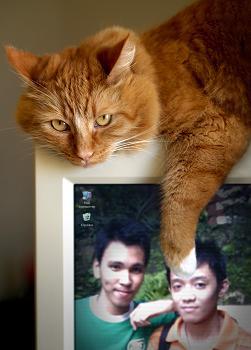 jos cat by kebilishoes
