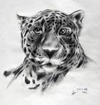 Leopard on pencils
