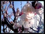 My spring by seya88